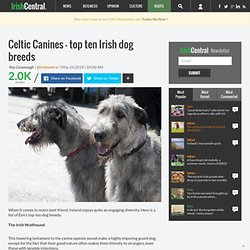 Celtic Canines - top ten Irish dog breeds