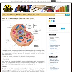 Qué es una célula y cuáles son sus partes : Apuntes para Estudiar
