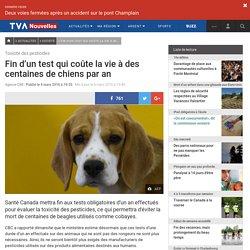 Fin d'un test qui coûte la vie à des centaines de chiens par an