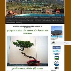 centre de bonsai - location de gites dans les corbières