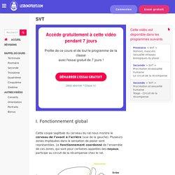 Centres du plaisir et circuit de la récompense chez le rat - SVT - Première - Cours en ligne - Les Bons Profs