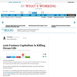 21st-Century Capitalism Is Killing Ocean Life