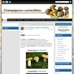 Jeromecaravieilhes pearltrees - Les champignons de jardin sont ils comestibles ...