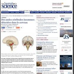 Des ondes cérébrales inconnues détectées dans le cerveau