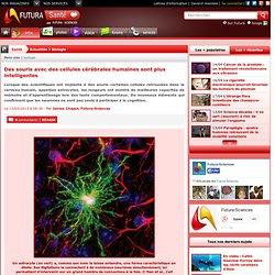 Des souris avec des cellules cérébrales humaines sont plus intelligentes