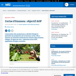 FRANCE BLEU 03/06/19 Cerise d'Itxassou : objectif AOP