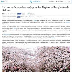 Le temps des cerises au Japon, les 20 plus belles photos de Sakura