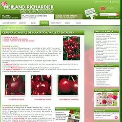 Cerisier : conseils de plantation, taille et entretien