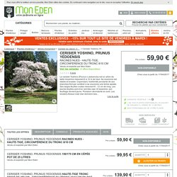 Cerisier Yoshino, Prunus yedoensis - Mon Eden