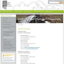 CAPA : Certificat d'Aptitude Professionnelle Agricole - Conseil des Chevaux Hauts-de-France