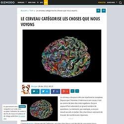 Le cerveau catégorise les choses que nous voyons