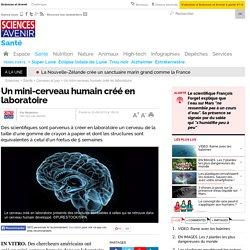 Un mini-cerveau humain créé en laboratoire
