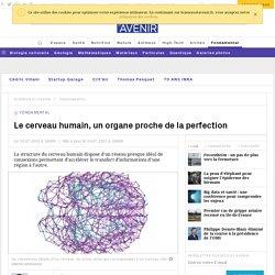 Le cerveau humain, un organe proche de la perfection