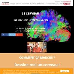 Le cerveau, une machine hyperconnectée -L'Esprit Sorcier - Dossier #24