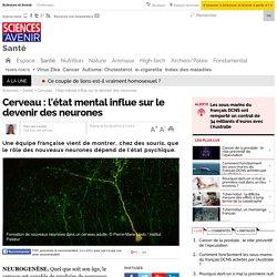 Cerveau : l'état mental influe sur le devenir des neurones