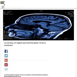 Le cerveau, un organe que l'homme passe 15 ans à construire