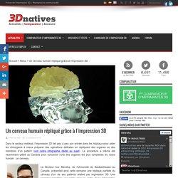 Un cerveau humain répliqué grâce à l'impression 3D