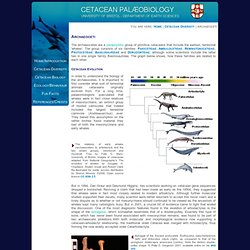 Cetacean Palaeobiology