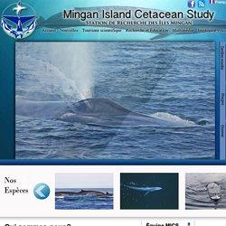 MICS - Mingan Isand Cetacean Study - Station de recherche des Îles Mingan