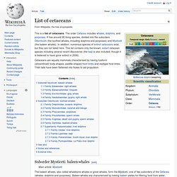 List of cetaceans