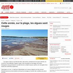 Cette année, sur la plage, les algues sont rouges , Crozon 25/08/2012
