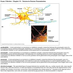 CH 11 Neuron-to-Neuron Transmission