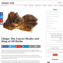 Chaga: The Cancer Healer and King of All Herbs