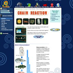 Chain Reaction - Build a Food Chain