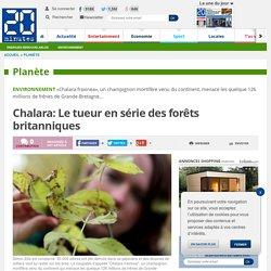 20MINUTES 03/02/13 Chalara: Le tueur en série des forêts britanniques