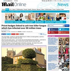 DAILYMAIL 10/11/12 Privet hedges linked to ash tree killer fungus which has infected over 80 million trees