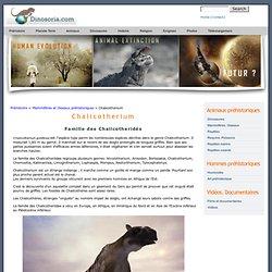Chalicotherium . En Images
