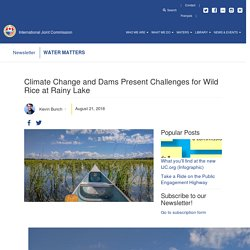 INTERNATIONAL JOINT COMMISSION 21/08/18 Climate Change and Dams Present Challenges for Wild Rice at Rainy Lake