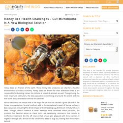 Honey Bee Health Challenges – Gut Microbiome Is A New Biological Solution