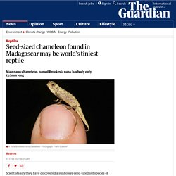 Seed-sized chameleon found in Madagascar may be world's tiniest reptile