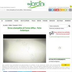 Orme champêtre et l'orme diffus : fiche botanique