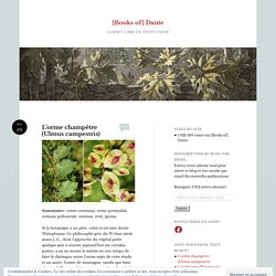 L'orme champêtre (Ulmus campestris)