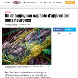 Un champignon capable d'apprendre sans neurones