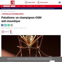 RFI 08/06/19 Paludisme: un champignon OGM anti-moustique