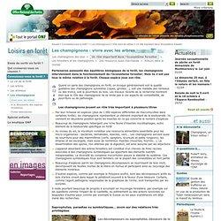 Le rôle important des champignons dans l'écosystème forestier