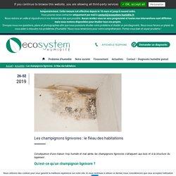 Les champignons lignivores : le fléau des habitations - EcoSystem Humidité