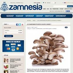 Les champignons peuvent-ils sauver le monde ? - Zamnesia