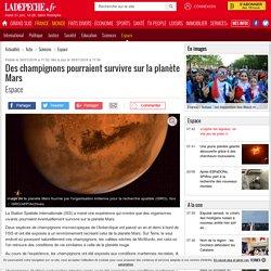 Des champignons pourraient survivre sur la planète Mars - 30/01/2016 - ladepeche.fr