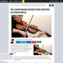 Des champignons peuvent faire renaître les Stradivarius