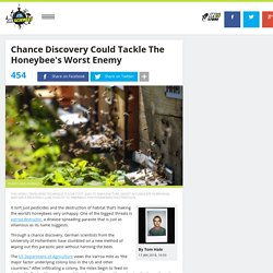 Chance Discovery Could Tackle The Honeybee's Worst Enemy
