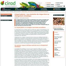CIRAD 06/09/17 Criquet pèlerin : une évolution du risque face au changement climatique