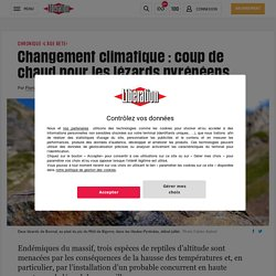 Changement climatique: coup de chaud pour les lézards pyrénéens