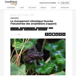 Le changement climatique favorise l'hécatombe des amphibiens (rapport) - GoodPlanet mag'