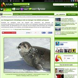 Le changement climatique met en danger les bébés phoques