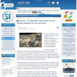France : 70 dauphins s'échouent sur les plages landaises en une semaine
