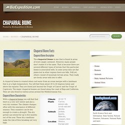 Chaparral Biome - Facts and Information - The Portal of Life
